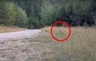 Ein Fahrradfahrer bemerkt Bewegungen im Gebüsch: Jemand folgt ihm..und das ist keine gute Nachricht!