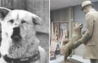 De Trouwste Hond Ter Wereld Wacht Tien Jaar Lang Op Zijn Baasje Bij Het Station, Lees Hier Hoe Het Begon