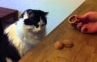 Un gato jugando al juego de la pelotita escondida