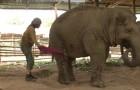 Eine Frau beginnt in der Nähe eines Elefanten zu singen.. Wenig später passiert das Unmögliche