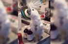 Questo pappagallo ama ballare, ma sul finale farà anche di più... Che forza!