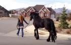 Ze neemt haar paard mee voor een wandeling over straat. Haar buren weten niet wat ze zien!