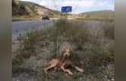 Malato e abbandonato nel mezzo del nulla: ecco il salvataggio di un cucciolo fortunato
