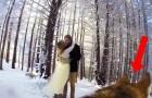 Ein Brautpaar lässt das Hochzeitsvideo vom Hund filmen: Das Ergebnis ist wahre Poesie