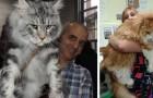 Voici le plus grand chat domestique du monde: découvrez son histoire et ses secrets