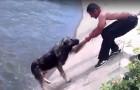 Die 10 unglaublichsten Rettungen von Hunden aller Zeiten...