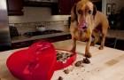 Il cane ha mangiato una scatola di cioccolatini? Ecco cosa può succedere