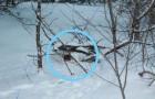Un homme remarque une boîte dans la neige et sauve deux chatons qui ont été abandonnés à eux-mêmes