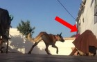 Volta para casa depois de muito tempo e faz uma brincadeira com o cão: veja a reação do animalzinho
