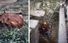 Een hond is in een put gevallen en dreigt te verdrinken: geniet van deze heldhaftige reddingsoperatie