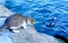A cat notices a fish in the sea: the way he's able to catch it, will surprise you!