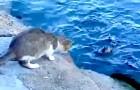 Eine Katze sieht einen Fisch im Meer. Wie sie ihn fängt, wird euch überraschen!