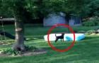 Los niños se esconden bajo la piscina: lo que hace el perro los hara doblar de la risa