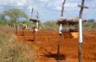 I contadini africani installano alveari lungo i loro campi perché gli elefanti non sopportano le api