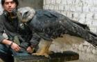 Voici l'aigle le plus grand et le plus puissant du monde: découvrez ses armes redoutables