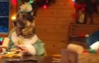 Questi amici pelosi vi mostrano il vero spirito del Natale... a modo loro!