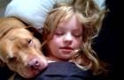 Cette petite fille est autiste et son pit-bull la comprend comme personne au monde