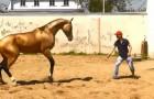 In deze video kun je genieten van de spectaculaire training van één van de mooiste paarden ter wereld