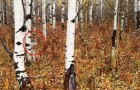 30 Jahre nach der Katastrophe von Chernobyl machen Forscher eine überraschende Entdeckung