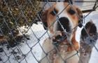 10 motivi per cui dovreste tenere in casa il cane durante l'inverno... e non solo