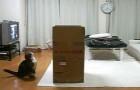 Questo gatto è OSSESSIONATO dalla scatola: i suoi sforzi vi faranno sorridere