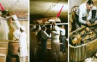 De Indrukwekkende Foto's In Kleur Van De Opening Van De Tombe Van Koning Toetankhamon