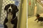 Er wird im Tierheim adoptiert. Hier seht ihr seine Reaktion, als er aus dem Käfig kommt