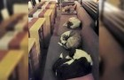 La nuit, cette cafétéria ouvre ses portes aux chiens errants : la raison est émouvante