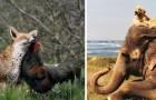 Queste 12 coppie di animali ci dimostrano che l'amicizia non conosce limiti