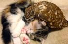 Un gatto e un gufo hanno reso famosa una caffetteria giapponese con il loro legame unico