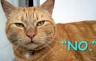 6 cose che facciamo e che il nostro gatto ODIA - anche se non può dircelo!