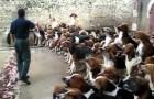 Ecco come un allevatore tiene a bada un branco di cani affamati...