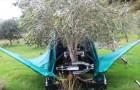 Wie diese Maschine Oliven erntet, ist überraschend und hypnotisierend