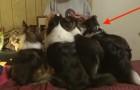 Honden staan in de rij voor hun baasje: de linker is een echte GENIE