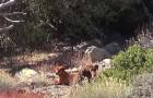 2 ausgesetzte Hunde werden in den Bergen gefunden... Ihre Rettung ist nicht einfach!
