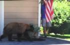 Un ours et une homme se retrouve face à face: leur réaction est... IDENTIQUE!