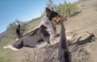 An incredible dog shows us the best way to use a selfie stick ... Wow!