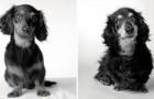 Fotografa gli stessi cani da cuccioli e da anziani: il risultato è incredibilmente toccante