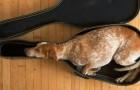 Queste 15 foto dimostrano che per un cane è possibile dormire ovunque