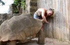 A turtle this big can be frightening, but look at his behavior ...