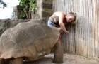 Eine so große Schildkröte kann bedrohlich aussehen, aber schaut mal, wie sie sich verhält
