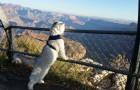 Seine Familie hat ihn nie zu Hause zurück gelassen: Die glückliche Katze Gandalf hat bereits die halbe Welt bereist