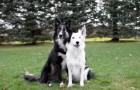La ragazza sta per fotografare i suoi due cani... Ma tenete gli occhi su quello nero!