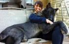 Reusachtige honden: hier volgen een aantal honden die zich er maar niet bij kunnen neerleggen dat ze geen schoothondjes zijn!
