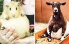 La grossesse vous rend belle: les mamans animaux aux gros ventres vous feront sourire (voire compatir!)