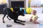 Los perros aman los bebès