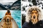 Porta il suo cane in giro per il mondo e dimostra che sono i migliori compagni di viaggio