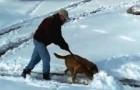 Denna man försöker ploga snön i trädgården: men titta noga på vad hunden gör!