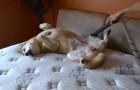 Cani e aspirapolveri