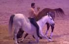 Er dressiert seine Pferde mit einer besonderen Technik... Schaut mal, was er macht